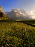 Spring Alpine Flower Meadow and Mountains, Grindelwald, Bern, Switzerland, Europe Photographic Print by Richardson Peter