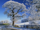 Frosted Tree at Roadside and Rural Winter Scene, Lincolnshire, England, United Kingdom, Europe Lámina fotográfica