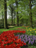 Tulips and Hyacinths in the Keukenhof Gardens at Lisse, the Netherlands, Europe Photographic Print by Groenendijk Peter