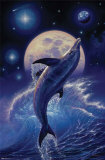 Dolphin - Balance of Life Prints