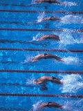 Start of a Men's Backstroke Swimming Race Reproduction photographique par Steven Sutton