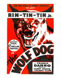 The Wolf Dog, Rin Tin Tin Jr., 1933 Photo