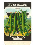 Bush Bean Seed Packet Posters