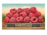 Giant Raspberries on Flatbed Posters