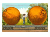 Giant Oranges on Flatbed Posters
