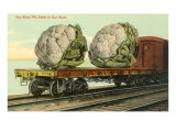 Giant Cauliflower on Flatbed Art