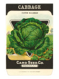 Cabbage Seed Packet Posters