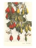 Cashew Plants, Trinidad Plakát