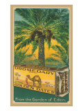 Dromedary Golden Dates Posters