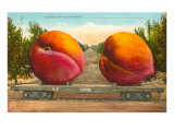 Giant Peaches on Flatbed Posters