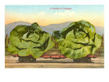 Giant Cabbages on Flatbed Posters