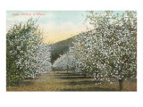Apple Orchard in Bloom Prints