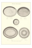 Serving Platters Prints