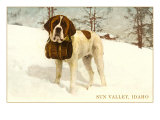 St. Bernard with Keg in Snow, Sun Valley, Idaho Posters