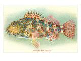 Hawaiian Fish, Oapukai Láminas