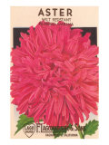 Aster Seed Packet Posters
