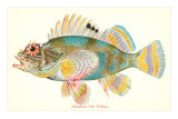 Hawaiian Fish, Pilikoa Posters