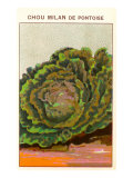 French Cabbage Seed Packet Posters