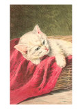 White Kitten with Red Cloth Posters