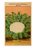 French Cauliflower Broccoli Seed Packet Prints