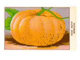 French Pumpkin Seed Packet Prints