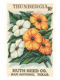 Thunbegia Seed Packet Print