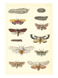 Varieties of Moth Prints