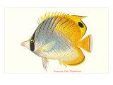 Hawaiian Fish, Chaetodon Posters