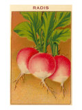 French Radish Seed Packet Prints