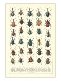 Lots of Beetles Poster