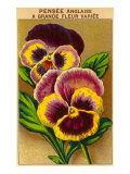 French Pansy Seed Packet Poster