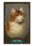 Fluffy Cat Posters