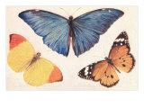 Three Butterflies Prints