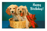Happy Birthday, Two Spaniels in Basket Print