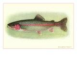 Rainbow Trout Prints
