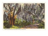 Spanish Moss in Dixieland Prints