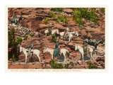 Horses on Bright Angel Trail, Grand Canyon Prints