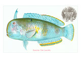 Hawaiian Fish, Lae-Nihi Posters