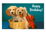 Happy Birthday, Two Spaniels in Basket Prints