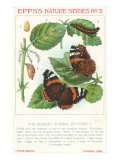 Epps's Nature Series, Scarlet Admiral Butterfly Art