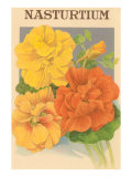 Nasturtium Seed Packet Prints