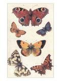 Butterflies Poster