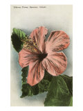 Hibiscus Flower, Hawaii Posters