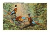 Chinese Pheasants, Idaho Posters