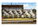 White Patrol Horses, Sioux City, Iowa Prints