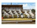 White Patrol Horses, Sioux City, Iowa Prints