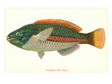 Hawaiian Fish, Ohua Posters