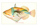 Le nakunuku, poisson hawaïen Affiche