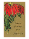 Season's Greetings from Hawaii, Poinsettias Print