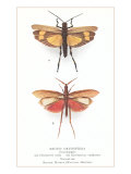 Exotic Orthoptera, Grasshoppers Prints